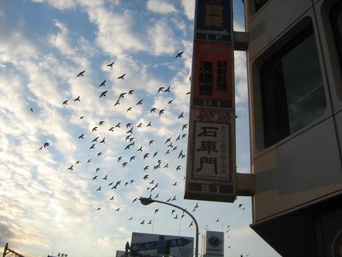 Birds flying over Takadanobaba 2