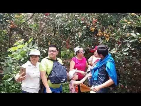 Tour du lịch miệt vườn cần thơ