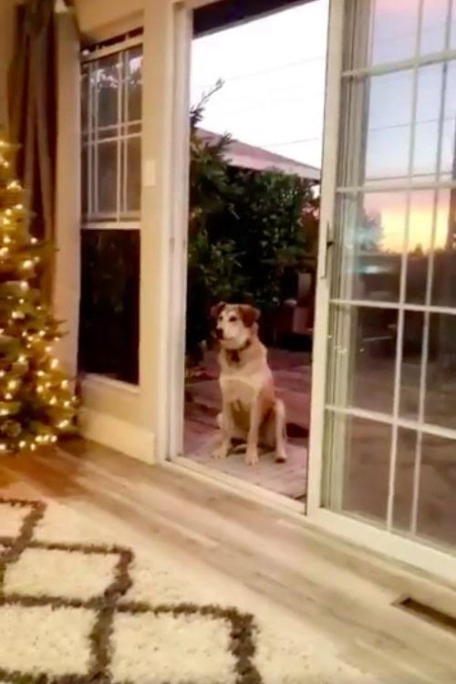 """Akelah, la graciosa perrita que sólo entra a casa cuando le abren """"la puerta invisible"""""""