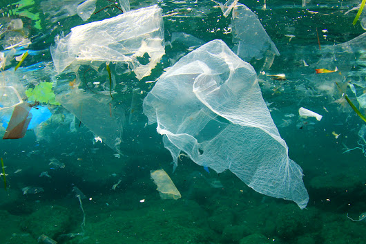 10 Ways to Reduce Plastic Pollution