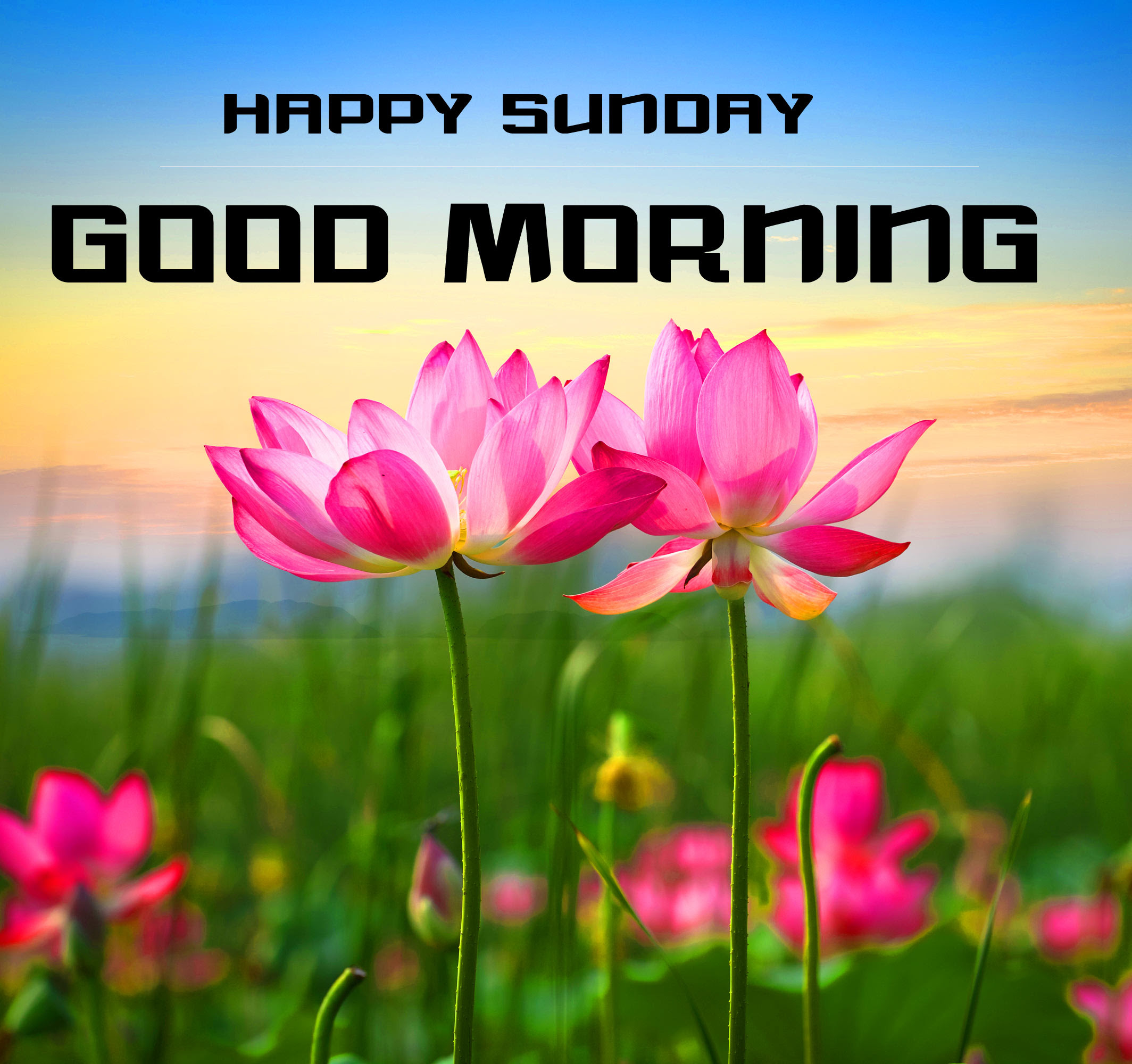 Sunday Good Morning Wishes Images Free for Facebook