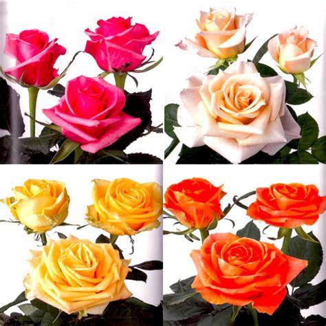 rose wedding flower package gold coast australia
