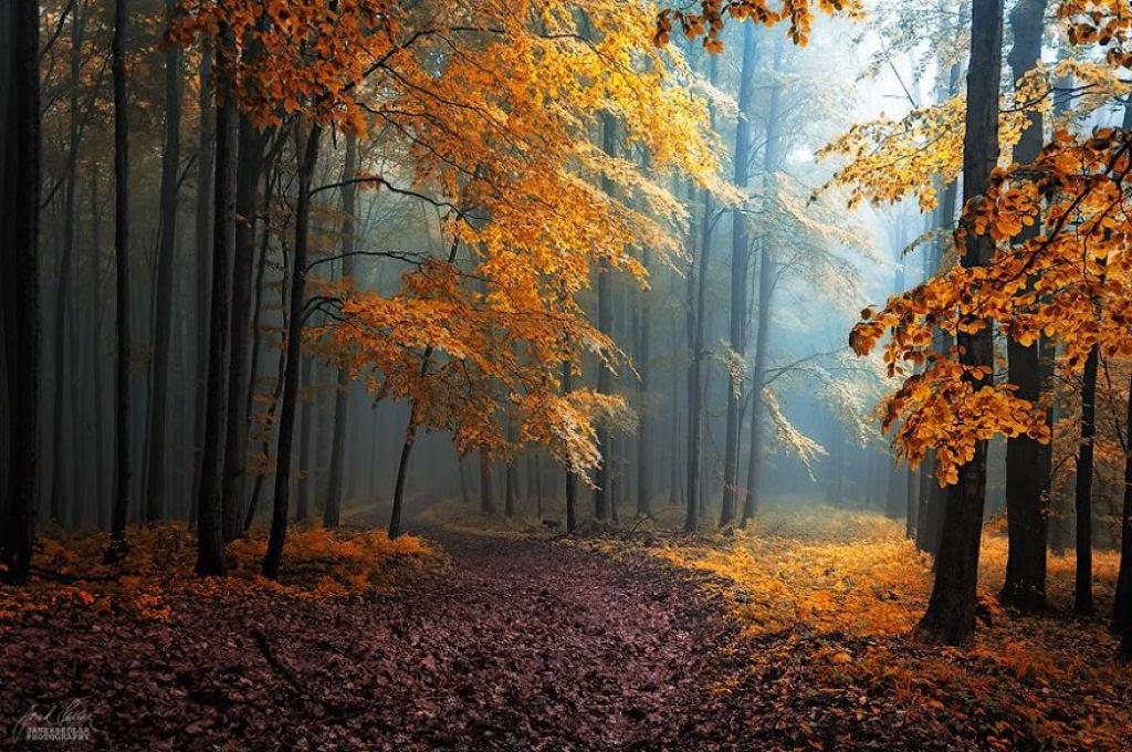Os bosques outonais oníricos de um fotógrafo tcheco 20