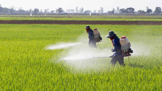 Paraquat Lawsuit - The Pesticide Linked to Parkinson's