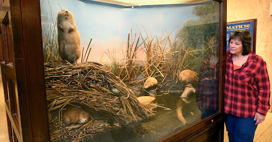 Making animals in exhibits seem lifelike, Akeley revolutionized taxidermy at Milwaukee Public Museum