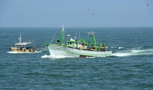 Resultado de imagem para traineiras e barcos de pesca