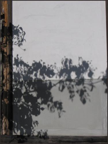 11 shadows of a tree