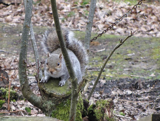 IMG_3333 squirrel