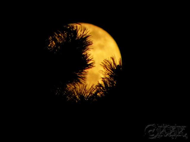 DSCN3316 6 APR 12 full moon