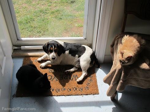 Bert and cats (2) - FarmgirlFare.com