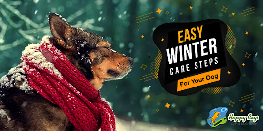 Winter Care For Your Dog In 5 Easy Steps