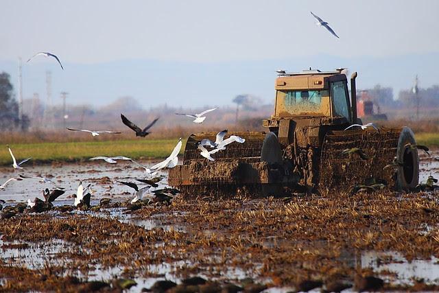 IMG_9097 Farmer Plowing