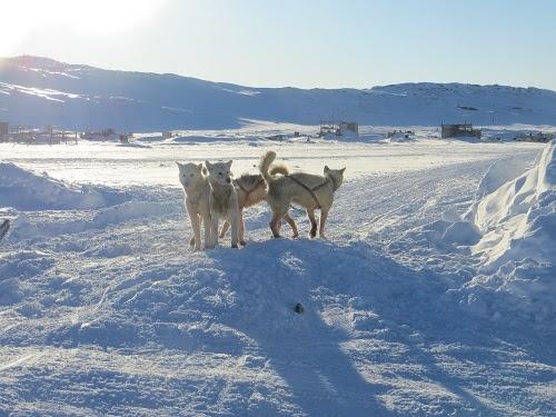 2015-03-11-1426108150-8892300-Greenland366.JPG