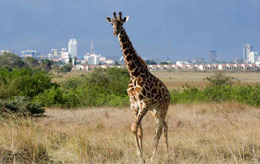 Nairobi City Excursions,Nairobi day trips,Nairobi National Park Tour