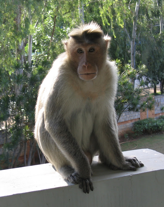 New Experiences with Monkeys in India - We Said Go Travel