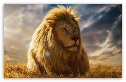 Lion King 4K HD Desktop Wallpaper for 4K Ultra HD TV ...