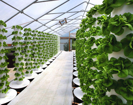 Six Mega-Trends in Indoor Agriculture - AgFunderNews