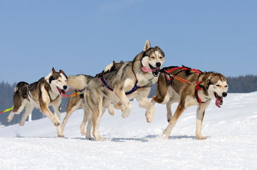 Have The Time Of Your Life On A Vermont Dog Sledding Tour!