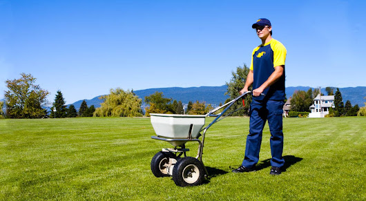Spring Lawn Care Tips for 2015