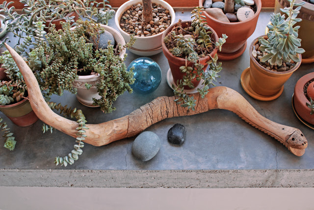 Pancho & my plants