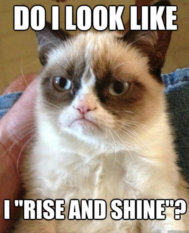 Grumpy Cat Rise And Shine Dump A Day