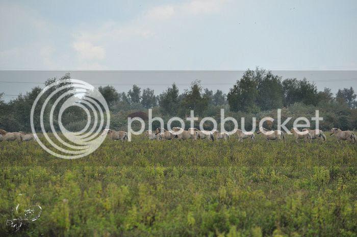 photo 15-10-2013StaatsbosbeheerZuid-Holland131-border.jpg