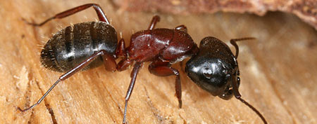 6 household pests you never want to meet (Orkin Pest Control)