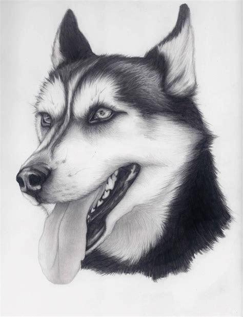 husky  alishamariedeviantartcom fine arts