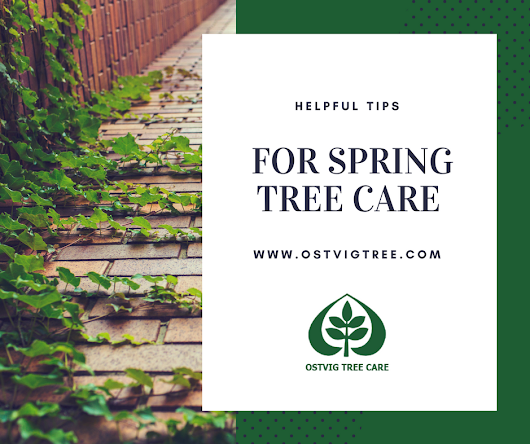 Helpful Tips for Spring Tree Care - Ostvig Tree Care