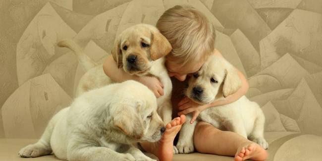 razões-para-mimar-o-seu-cachorro-9