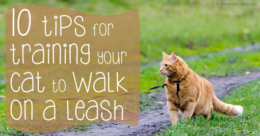 How to Walk Your Cat | Pet Training Tips