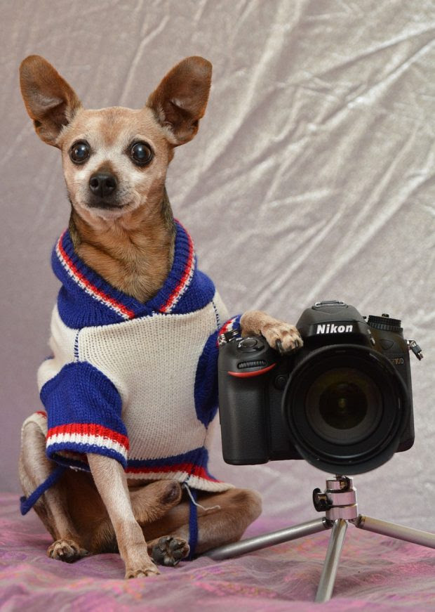 7 Crucial Steps For Taking Great Photos Of Your Dog