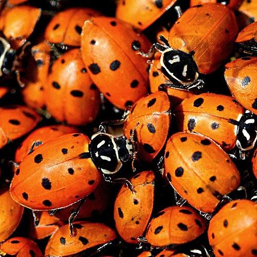 Lady Bug Cluster by LaVeta Jude
