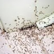 Improvements In Ant Control Methods Can Mean Ant Free Homes.