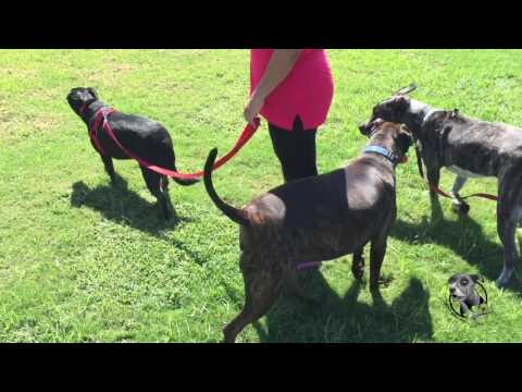 Video of the Day: Socialization with Ripley