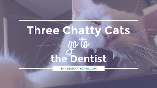 Three Chatty Cats go to the Dentist | Three Chatty Cats