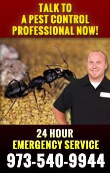 Ant Control Passaic County