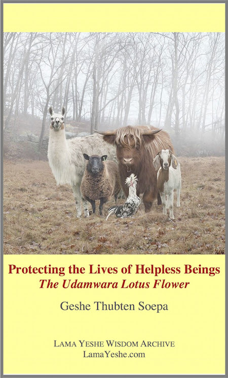 Protecting the Lives of Helpless Beings eBook