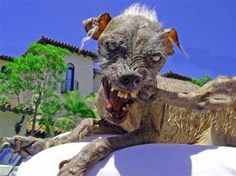The Ugliest Animals Of The World