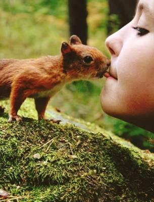 piccoli amici, teneri, cuccioli, nocciolina, bambino, scoiattolo