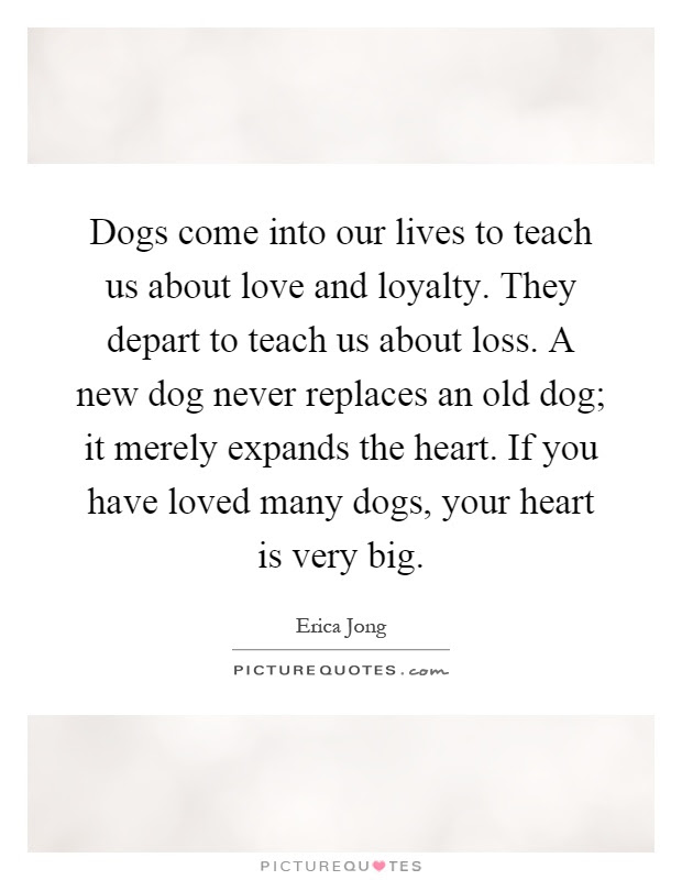 Dogs Come Into Our Lives To Teach Us About Love And Loyalty