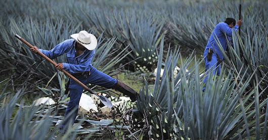 12 Things You Didn't Know About Tequila | VinePair
