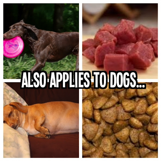 What Your Dog & Your Diabetic Uncle Have in Common