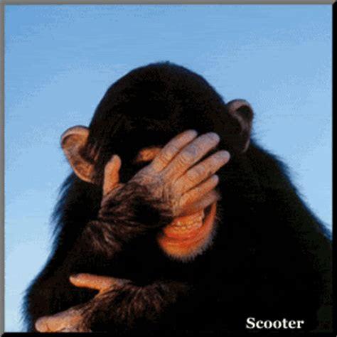 dp animasi monyet bergerak lucu gambar animasi gif swf