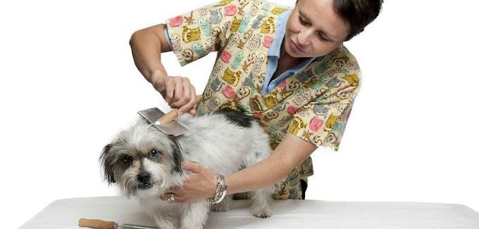 Consejos para elegir una peluquería canina