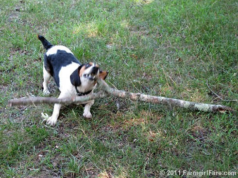 Bert with a big stick 2
