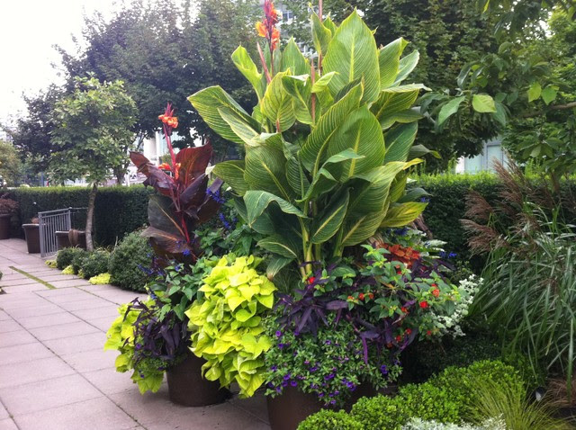 Modern Tropical - tropical - landscape - vancouver - by Glenna ...