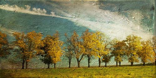 Autumn afternoon by Lynne Larkin