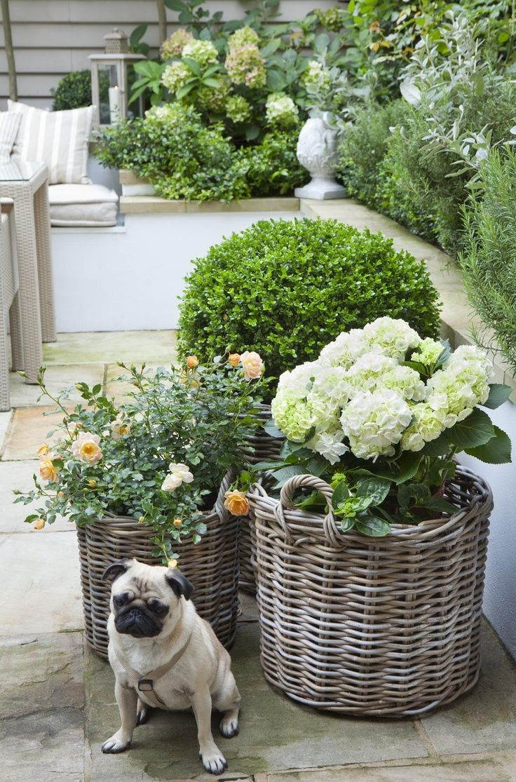 Box topiary balls, Vintage AND white hydrangeas and English roses in gray rattan baskets