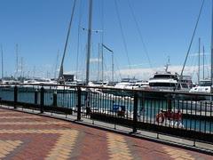 The marina, Auckland